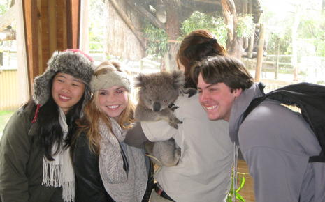 Meeting koalas
